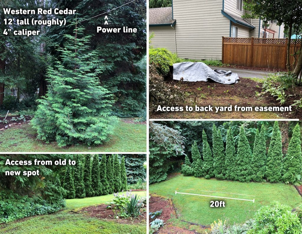 Tree planting location assessment